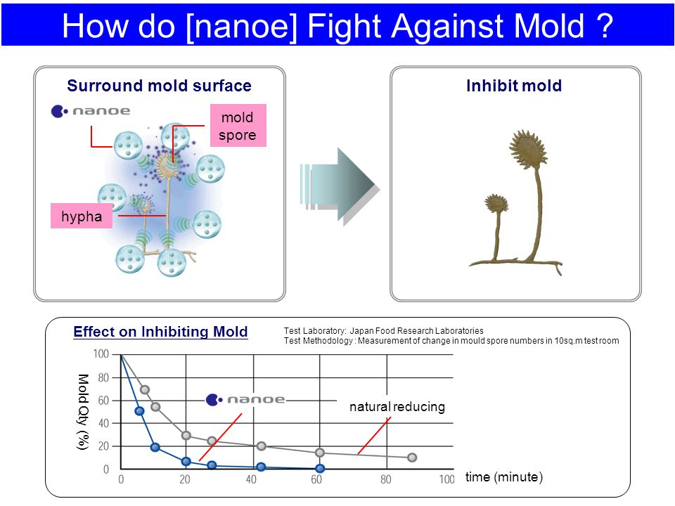 How do [nanoe] Fight Against Mold